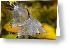 Silky Autumn Greeting Card by Susan Leggett