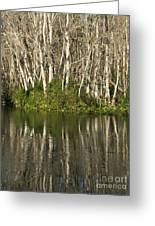 Silver River Reflections Greeting Card by Theresa Willingham
