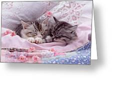 Silver Tabby Kittens Greeting Card by Jane Burton