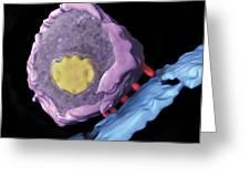 Simian Immunodeficiency Virus (siv) Greeting Card by Sriram Subramaniamnational Cancer Institute