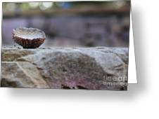 Simply Nature II Greeting Card by Laurinda Bowling