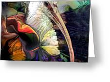 Sir Ibis Greeting Card by Doris Wood
