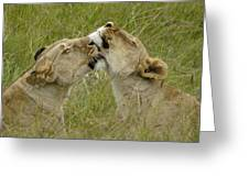 Sisterly Love Greeting Card by Michele Burgess