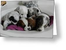 Six Clean Pups Greeting Card by LaDonna Vinson