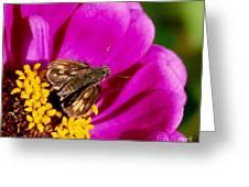Skipper And A Pretty Flower  Greeting Card by Alexandra Jordankova