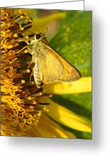 Skipper And Sunflower Greeting Card by Sandi OReilly