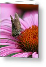 Skipper Butterfly Greeting Card by Juergen Roth