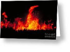Slash And Burn Agriculture Greeting Card by Dante Fenolio