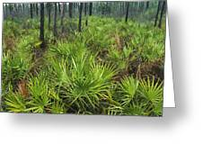 Slash Pines And Saw Palmettos Greeting Card by Klaus Nigge