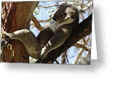Sleeping Koala Greeting Card by Bob Christopher