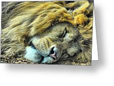 Sleeping Lion Greeting Card by Chris Thaxter