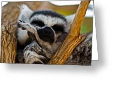 Sleepy Lemur Greeting Card by Justin Albrecht