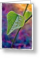 Smilax Greeting Card by Judi Bagwell