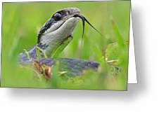 Snake In The Grass Greeting Card by Jessie Dickson