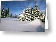 Snow Covered Trees In The Oregon Greeting Card by Natural Selection Craig Tuttle