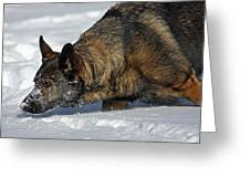 Snow Dog Greeting Card by Karol Livote
