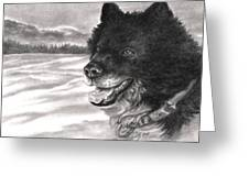 Snow Dog Greeting Card by Kathleen Kelly Thompson