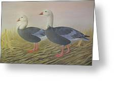 Snow Geese Greeting Card by Alan Suliber