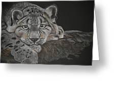 Snow Leopard Greeting Card by Stephanie L Carr