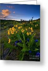 Snow Mountain Sunset Greeting Card by Mike  Dawson