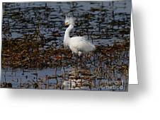 Snowy Egret . Solitude . 7d11963 Greeting Card by Wingsdomain Art and Photography