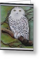 Snowy Owl Greeting Card by Agnieszka Jezierska-Drutel