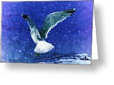 Snowy Seagull Greeting Card by Debra  Miller
