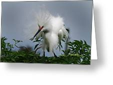 Snowy Stand Off Greeting Card by Skip Willits