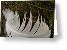 Soft Curve One Greeting Card by Odd Jeppesen