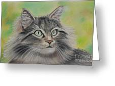 Soft Kitty Greeting Card by Julie Brugh Riffey