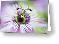 Soft Passion Greeting Card by Jacky Parker