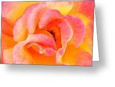 Soft Petals Greeting Card by Becky Lodes