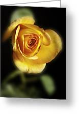 Soft Yellow Rose On Black Greeting Card by M K  Miller