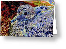 Solar Dove Greeting Card by Tam Ishmael - Eizman