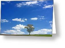 Solitary Tree In Green Meadow Greeting Card by Bernard Jaubert