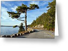 Somes Sound Maine Greeting Card by John Greim