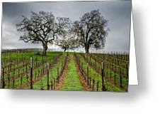 Sonoma County Vineyard Greeting Card by Joan McDaniel
