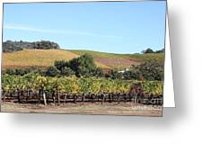 Sonoma Vineyards - Sonoma California - 5d19307 Greeting Card by Wingsdomain Art and Photography