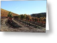 Sonoma Vineyards - Sonoma California - 5d19311 Greeting Card by Wingsdomain Art and Photography