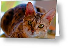 Sookie All Grown Up Greeting Card by Frank Feliciano