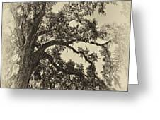 Southern Comfort sepia Greeting Card by Steve Harrington