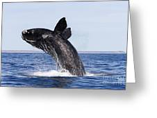 Southern Right Whale Greeting Card by Francois Gohier and Photo Researchers