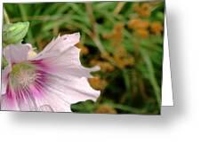 Southwest Alcea Rosea Greeting Card by Kat Ebling