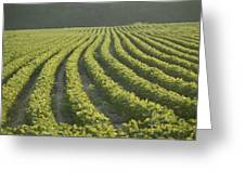 Soybean Crop Ready To Harvest Greeting Card by Brian Gordon Green