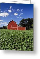 Soybean Field And Red Barn Near Anola Greeting Card by Dave Reede