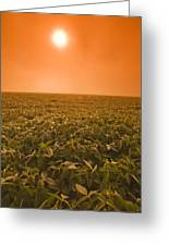 Soybean Field On A Misty Morning Greeting Card by Dave Reede