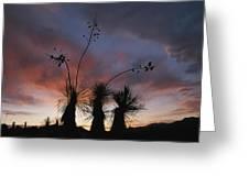 Spanish Bayonet Yucca Plants Greeting Card by Annie Griffiths