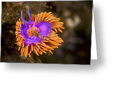 Spanish Shawl Greeting Card by Mike Raabe