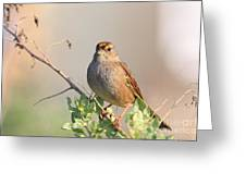 Sparrow Bird Perched . 40D12304 Greeting Card by Wingsdomain Art and Photography