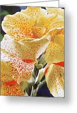 Speckled Lucifer Canna Lily Greeting Card by Sharon Von Ibsch